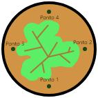 esquema do vaso de planta